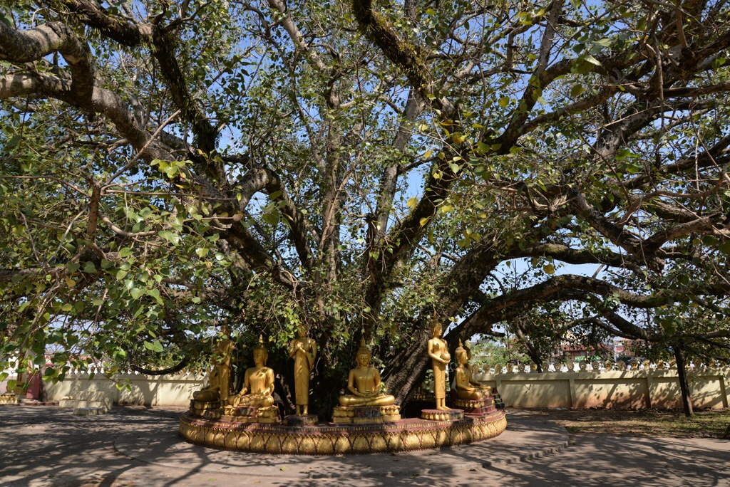 Statues around a bodhi tree