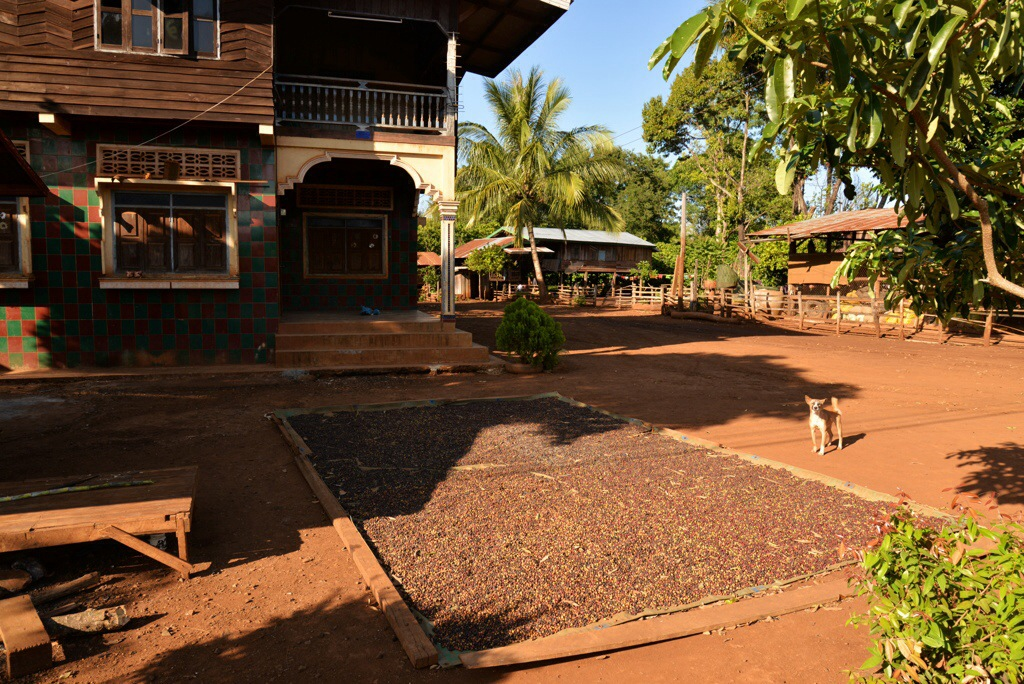 A village house, beans drying in the sun